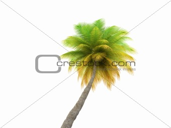 palm over white