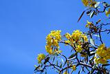 Yellow flowers and Blue Sky