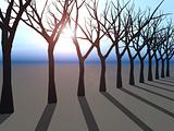 Trees Line on Horizon