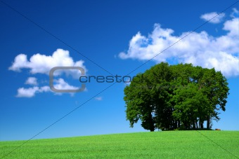 green grass field and a bunch of trees