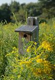 Wooden Birdhouse and Goldenrod