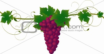 Autumn vine  vector illustration