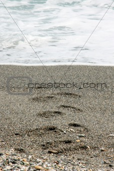 Footprints From the Sea