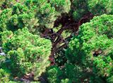 Aerial view of tree canopy