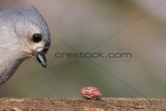Bird With A Peanut
