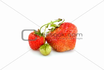 One green, unripe and pair of ripe red strawberries