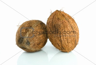 Pair of coconuts