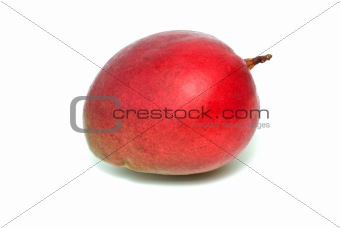 Single red mango fruit