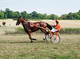 Horse trotting race