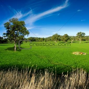 Rural Meadow