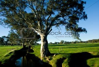 Rural Creek