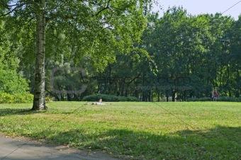City park in summer