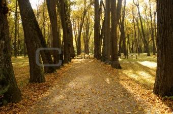 autumn road in park