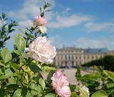 Beautiful roses and Baroque - Rococo style palace in background