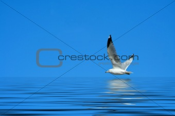 Seagull flying against a bright blue sky