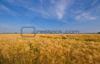 rural farmlandscape