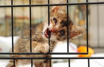 Cataract Rescue Kitten