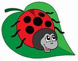 Cute ladybug on leaf vector illustration