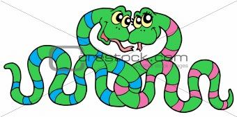 Pair of snakes in love