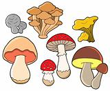 Various fungi collection