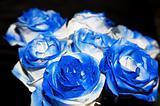 Blue rose buequet