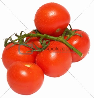 Branch of tomatos