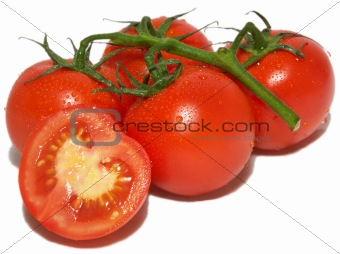 Branch of tomatos, isolated