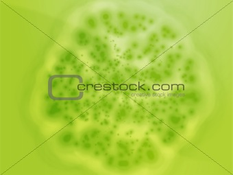 Bacterial cell growth illustration