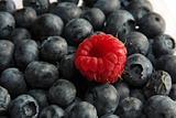 single raspberry on black currant