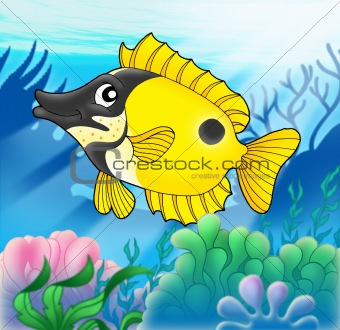Foxfish with anemones