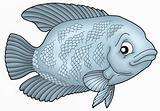 Gurama fish