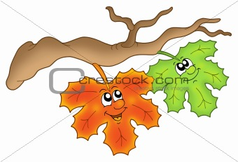 Pair of autumn leaves on branch