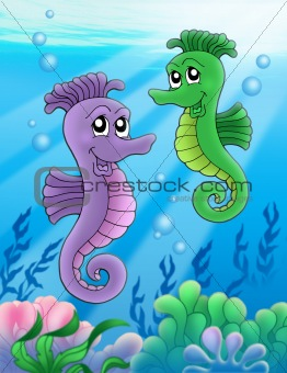 Pair of sea horses