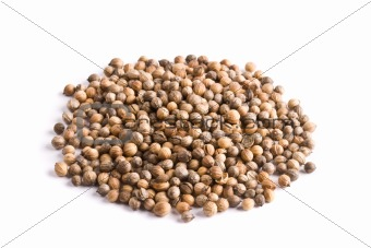 Pile of coriander close up isolated