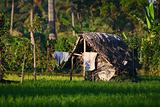 A Traditional Lodge on a Paddy Field