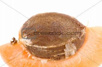 apricot macro
