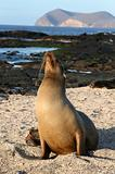 Female Sea Lion