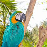 Colorful parrot (Macaw) in forest