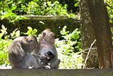 Monkey family