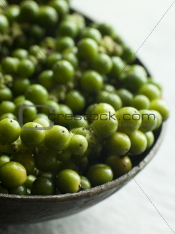 Green Peppercorns on the vine