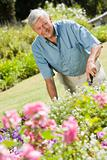 Senior man working in garden