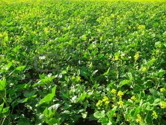 Green grass & yellow flowers
