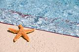 A colorful star fish sun bathing near a swimming pool on a bright sunny day