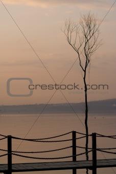 a tree and a bridge