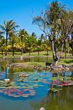 Tropicval paradise garden