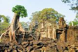 Tree at Preah Khan temple, Angkor, Cambodia
