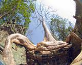 tree root, Ta Prohm temple, Angkor, Cambodia