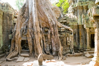 tower root, Ta Prohm temple, Angkor, Cambodia