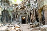 ruined doorway, Ta Prohm temple, Angkor, Cambodia