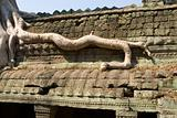 root on the roof, Ta Prohm temple, Angkor, Cambodia